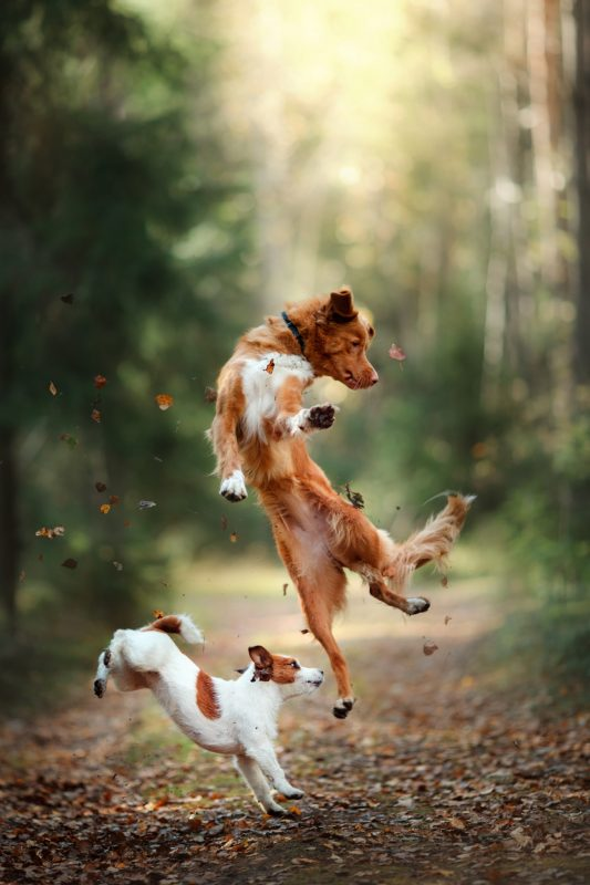 Dogs jumping happily